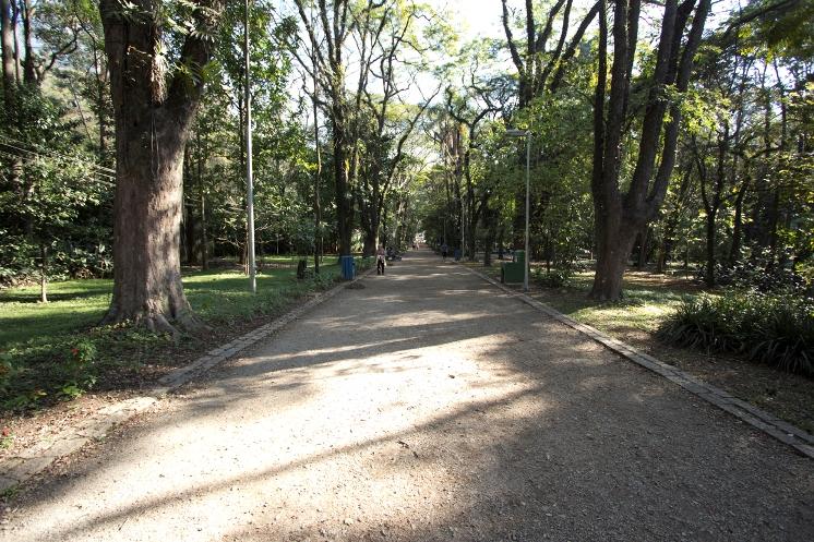 Arborização urbana e saúde pública