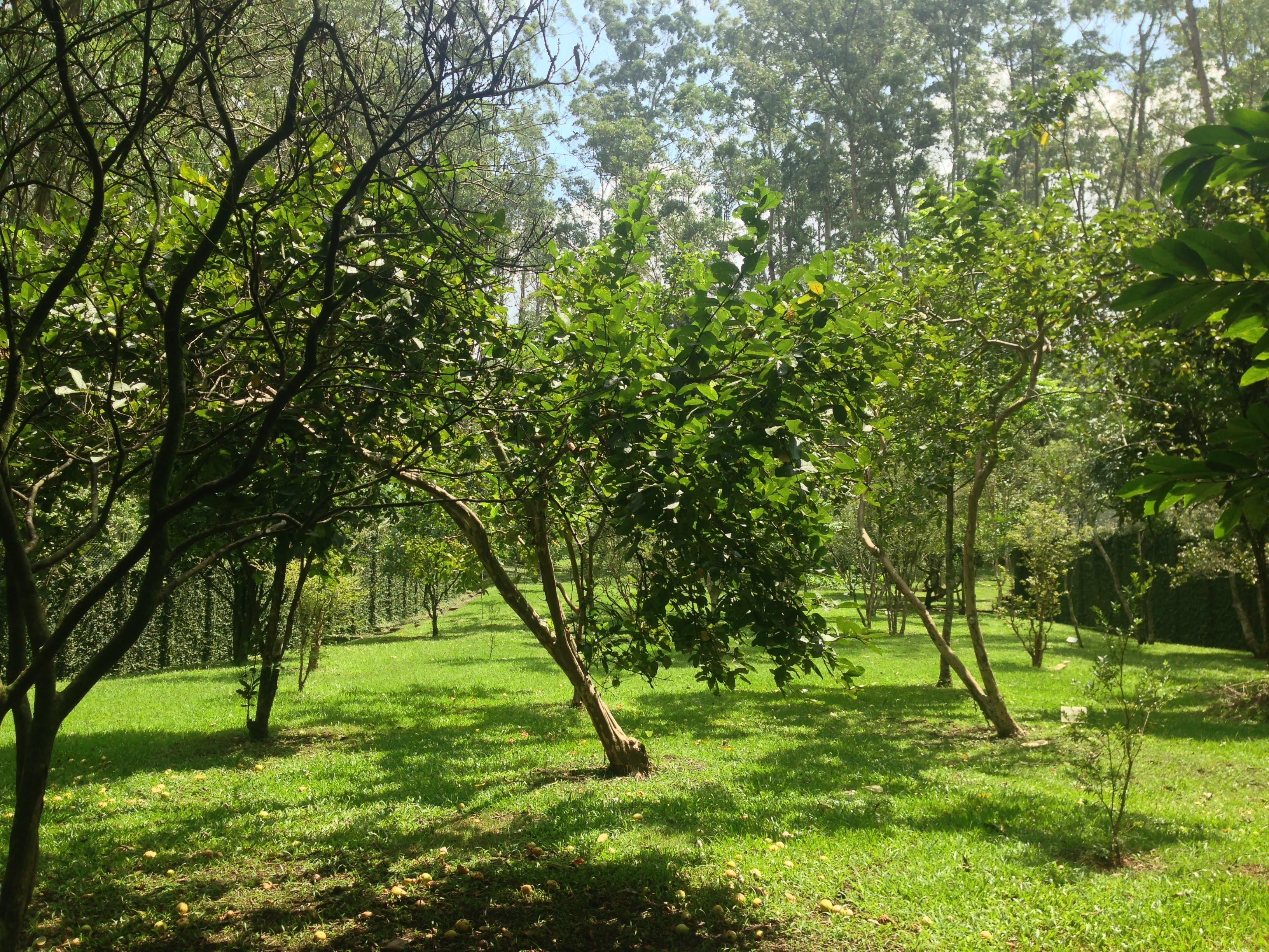 Como o projeto Floresta de Bolso quer ajudar SP a ficar mais verde e saudável