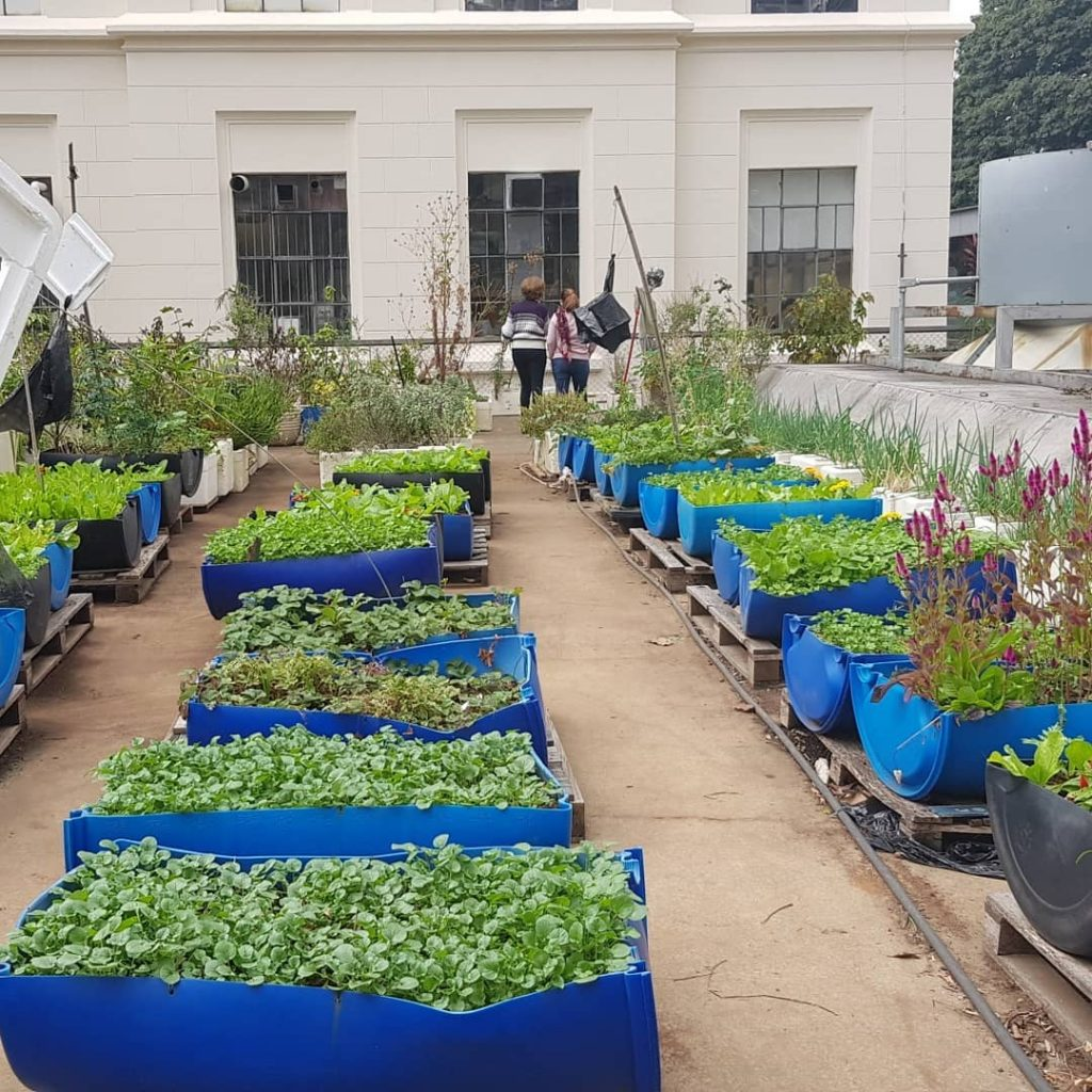 Voluntários da Horta da Faculdade de Medicina da USP disponibilizaram um livro online com receitas saudáveis feitas a partir dos ingredientes plantados na horta.