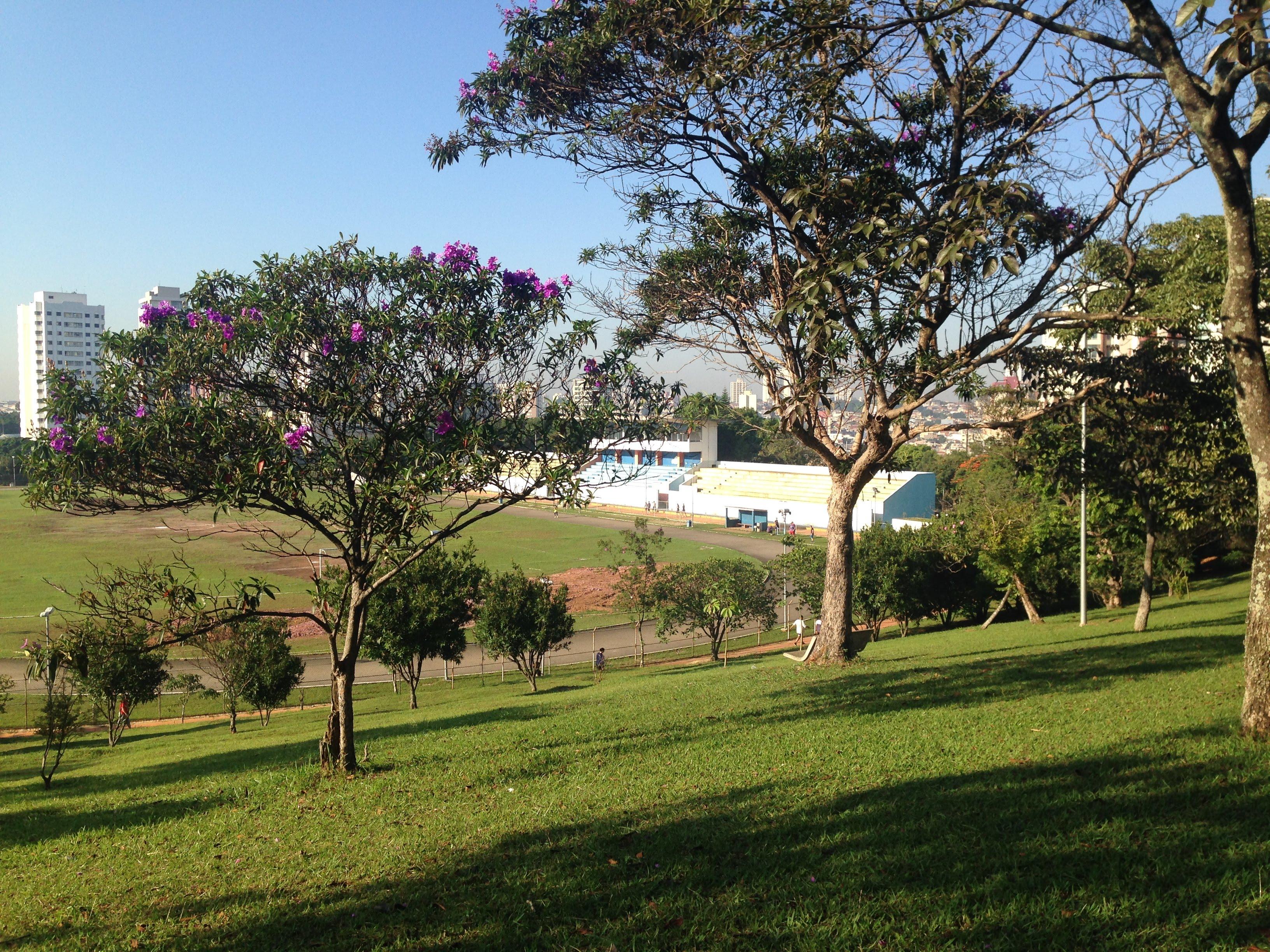Quintais de São Paulo: o quintal na laje da jornalista Ale Nahra